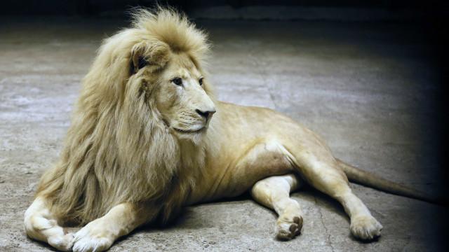 Caçador morto por bala no momento em que dispara contra leão