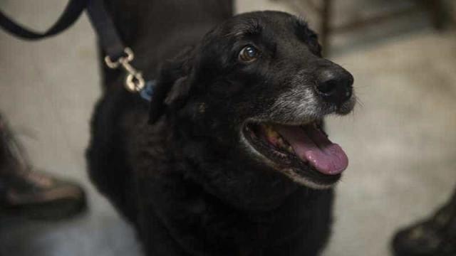 Cadela regressa a casa dez anos depois de ter desaparecido