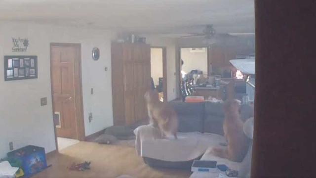 O apetite de um cão por panquecas resultou num pequeno fogo