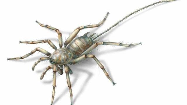 Descoberta aranha com 100 milhões de anos... e com uma cauda