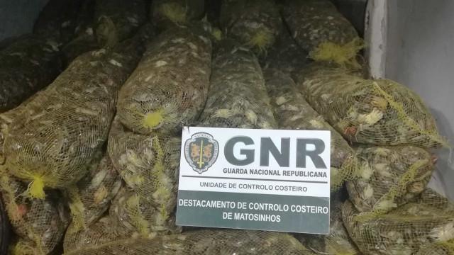Mais de sete mil euros de caranguejo mouro apreendidos pela GNR