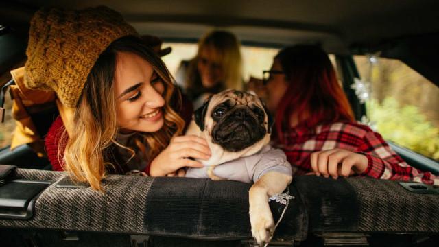 Animais de estimação vão influenciar os carros do futuro