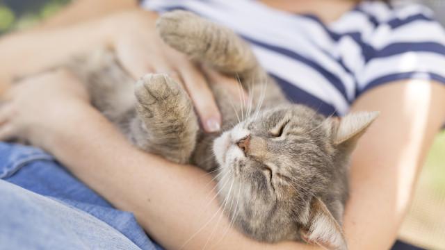 Não, os gatos não são antissociais (e há um estudo que o prova)
