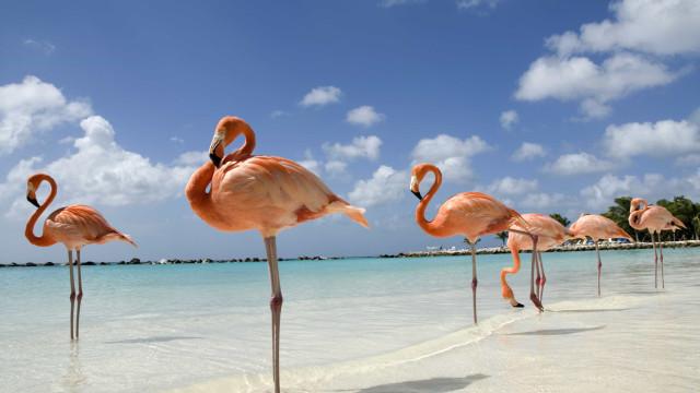 Emprego de sonho: Procura-se Diretor Executivo para cuidar de flamingos