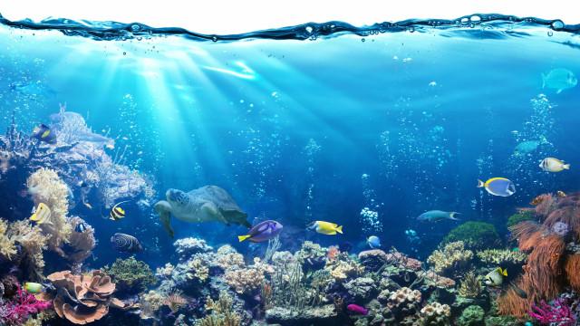 Peixe reproduz-se sem sexo e desafia teoria de extinção das espécies