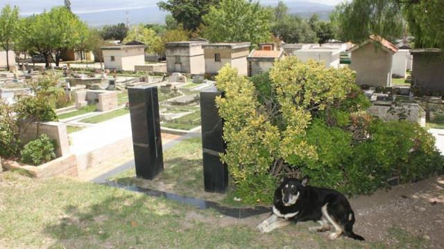 Morreu Capitán, o cão que velou campa do dono durante mais de dez anos