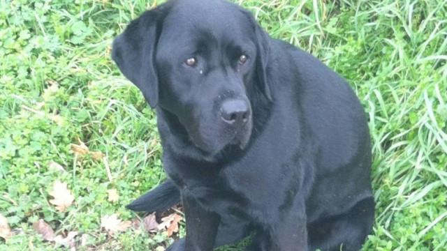 GNR encontrou cão em Viseu.  E tudo acabou da melhor forma
