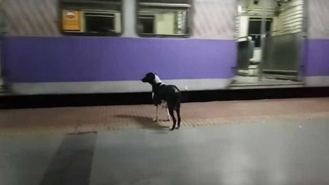 Esta cadela espera pelo comboio todas as noites na mesma estação da Índia