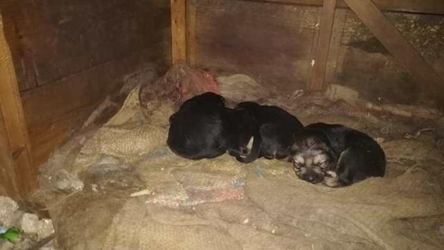 Ninhada de cachorros resgatada em Queluz. Acolhimento já está garantido