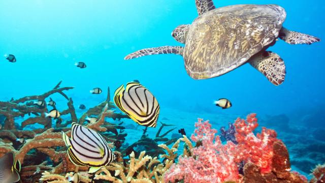 Beleza subaquática: Os recifes de coral mais bonitos do mundo