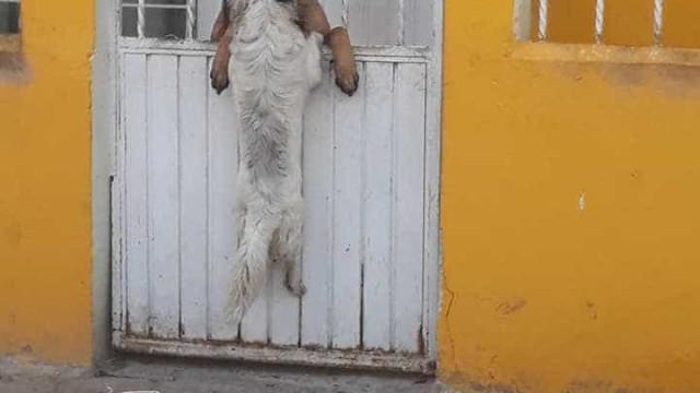 Cão fica com a cabeça presa nas grades mas amiga dá-lhe uma 'patinha'