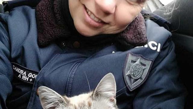 Agente da PSP adota gatinho abandonado que encontrou durante serviço