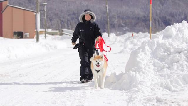 Deixe que dois cães Akita sejam os seus guias numa nova visita da Google