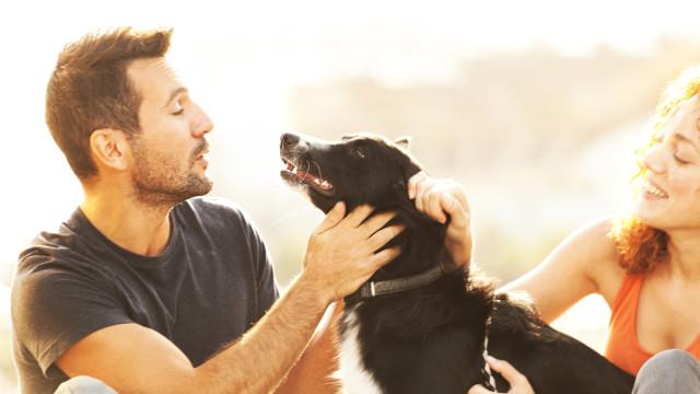 Quer chamar a atenção do seu cão? Fale com voz de bebé