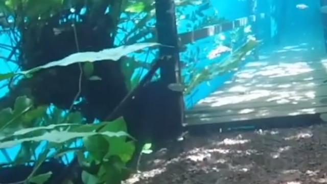 Fenómeno raro submergiu floresta tropical no Brasil