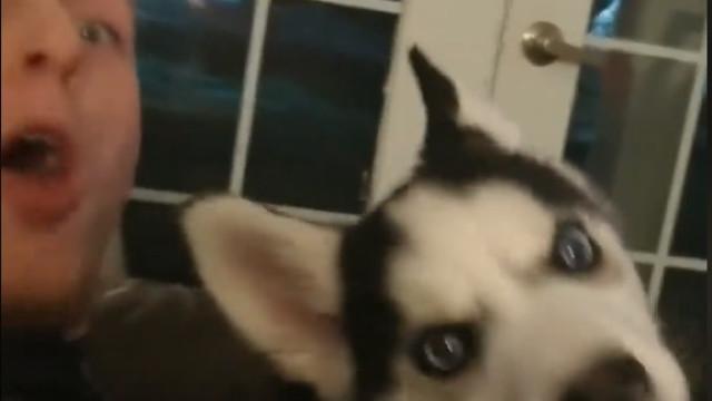 Este cão consegue repetir o palavrão dito pelo dono