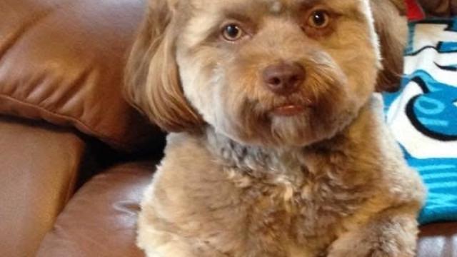 Cão com focinho 'humano' torna-se viral na internet