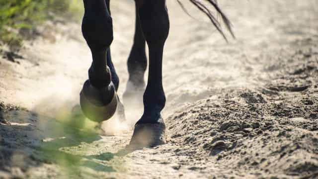 Cavalo resgatado com sucesso de buraco em Arcos de Valdevez