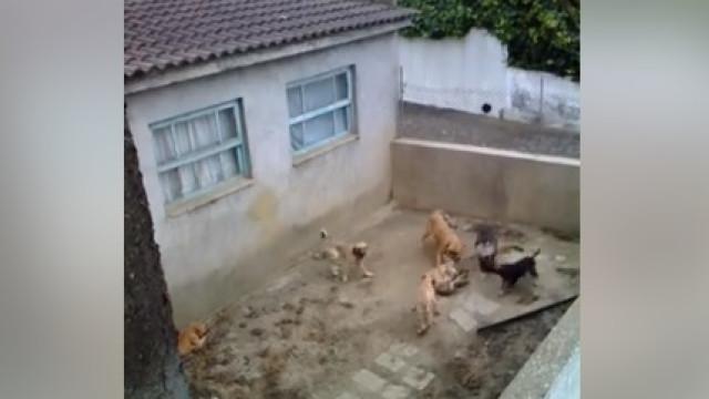 Vídeo denuncia falta de condições em que vivem cães na ilha Terceira