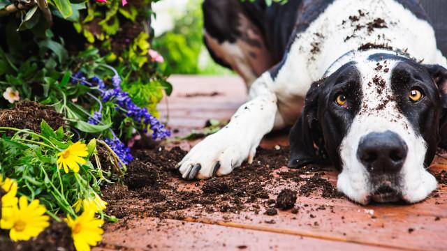 Carraças: Saiba como proteger o seu cão