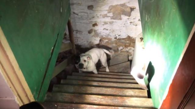 Homem muda-se para casa nova e encontra cadela abandonada na cave