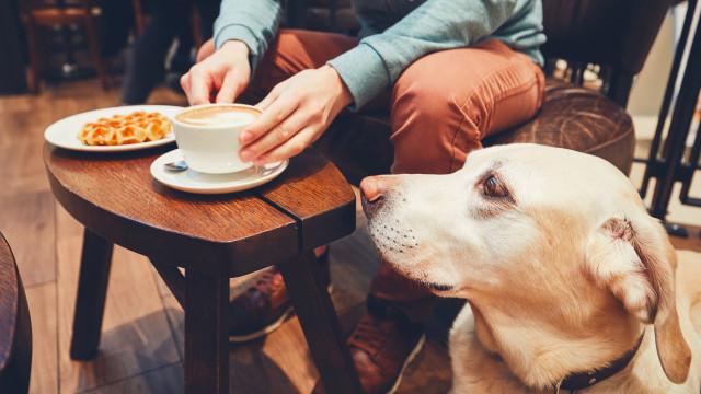 Animais podem entrar em restaurantes, mas donos têm uma palavra a dizer
