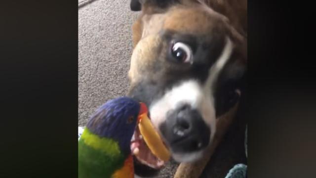 Um papagaio a alimentar um cão? Parece insólito, mas é verdade