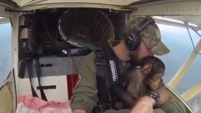 Piloto emocionado com bebé chimpanzé que resgatou