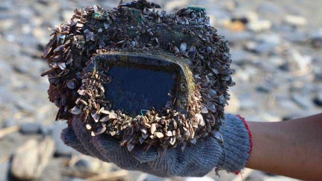 Perdeu máquina fotográfica no mar. Anos depois encontrou-a no Facebook