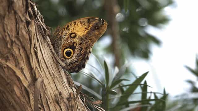 """Câmara com """"olho de borboleta"""" artificial consegue detetar melhor cancro"""