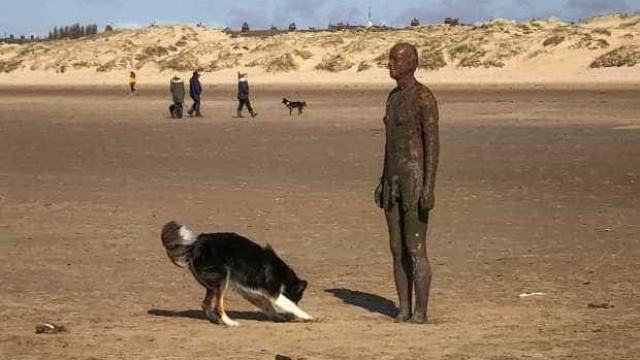 Cão queria brincar mas estátua não estava para aí virada
