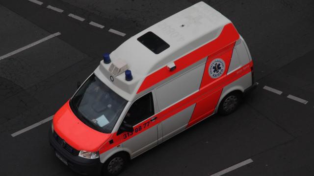 Cão de família mata bebé de sete meses na Alemanha