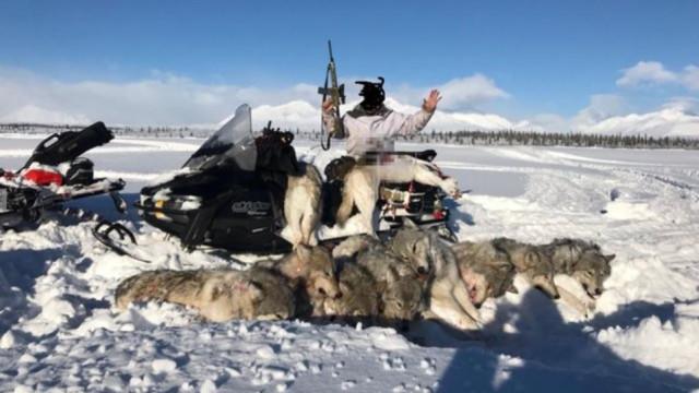 Caçador posa ao lado de 10 lobos que matou