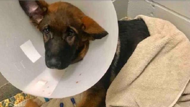 Maltrava cão para criar página de angariação de fundos falsa