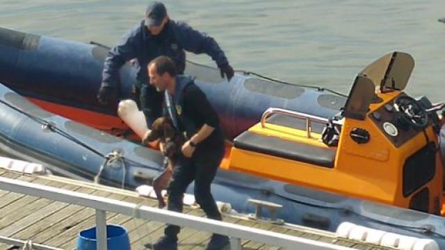 Cão resgatado do Douro pela Autoridade Marítima