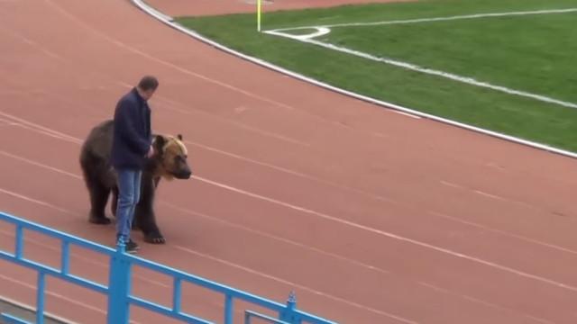 Jogo da 3.ª divisão russa teve direito a um urso... no estádio
