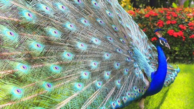 Reprodução a mais pode levar espécies à extinção (e sim, o tamanho conta)