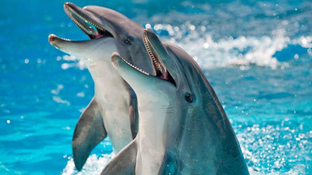 SABIA QUE os golfinhos podem nadar mais de 150 km por dia?