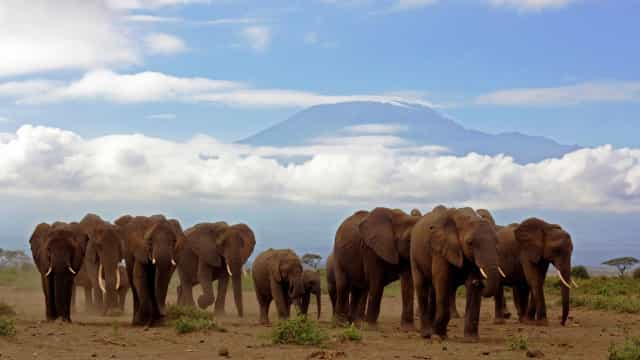 SABIA QUE os elefantes também fazem funerais?