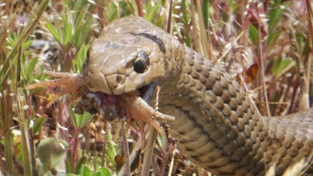 Homem morre na Austrália depois de ser mordido por cobra venenosa