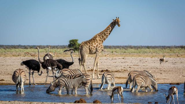 Vida selvagem: Descubra os melhores safáris para fazer em África