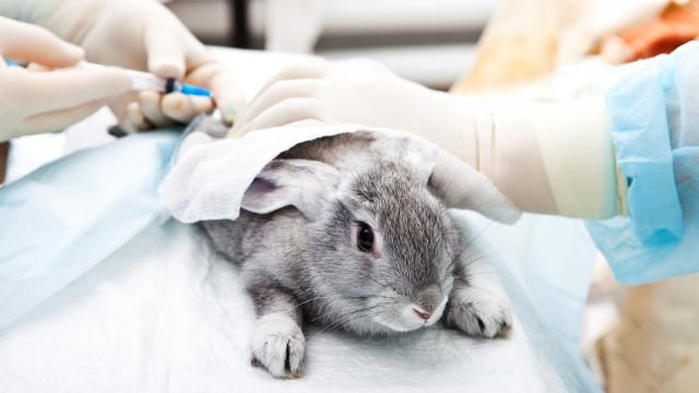 Está na hora da L'Oreal ser cruelty free, dizem os defensores dos animais