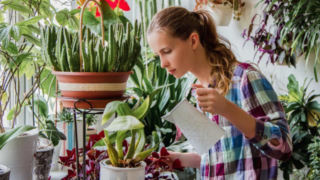Dicas úteis para cuidar de plantas em ambientes fechados