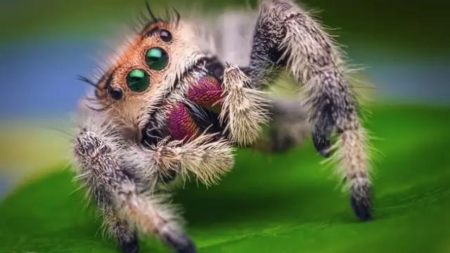 Investigadores querem ensinar robots a saltarem como aranhas
