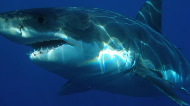 SABIA QUE os tubarões não querem atacar ou comer humanos?