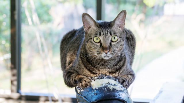 Sabe porque é que os gatos arranham 'tudo'?