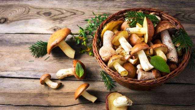 Esta é a maneira correta de cozinhar cogumelos (de acordo com a ciência)