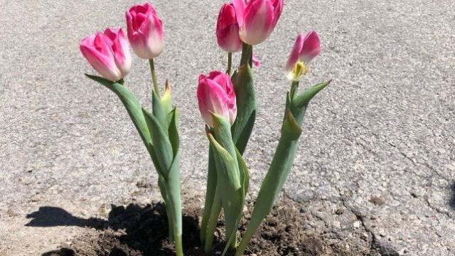 Têm aparecido flores plantadas pelas estradas de todo mundo. Porquê?