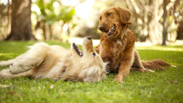 Os cães estão proibidos de ladrar nesta zona de França. Sim, leu bem