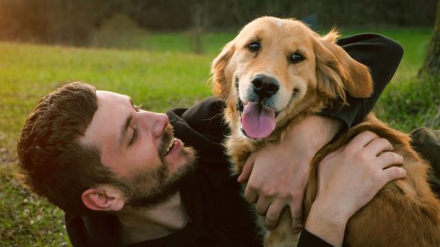 Cães conseguem diagnosticar cancro apenas pelo cheiro